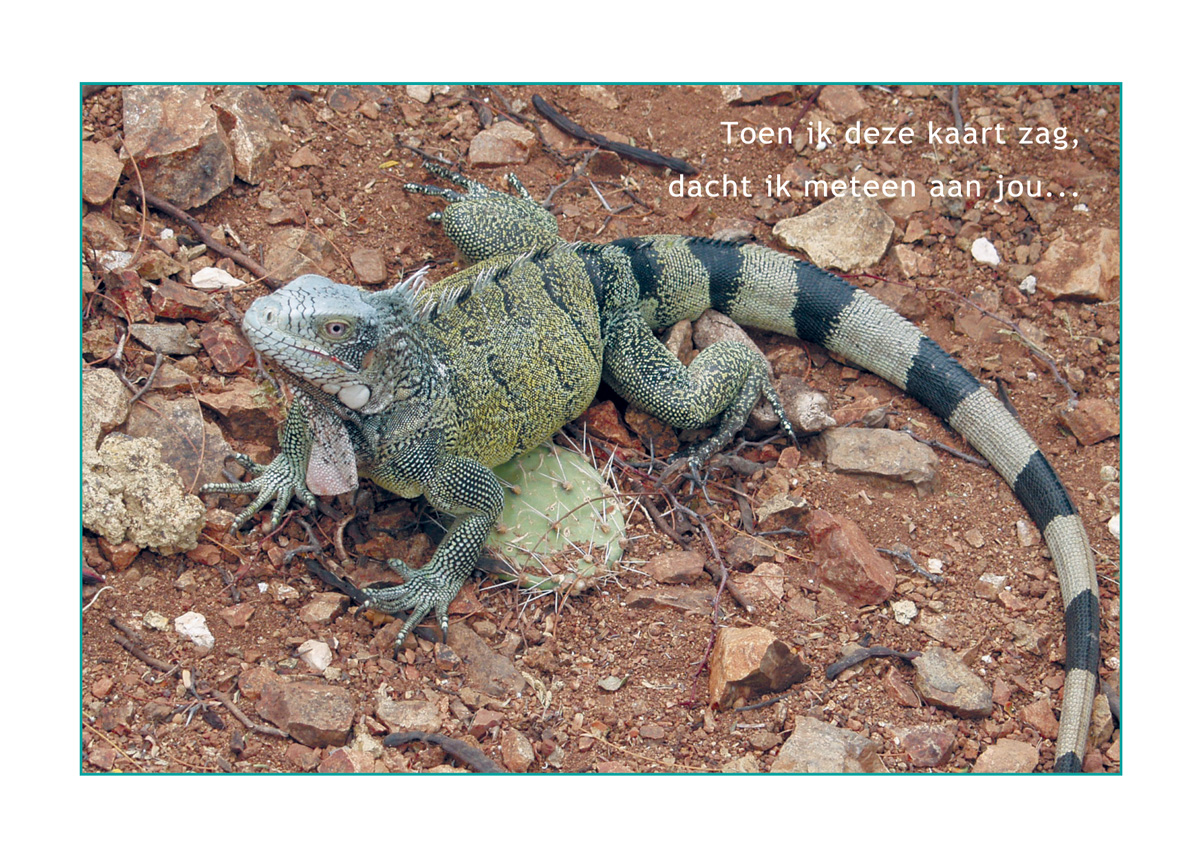 Postcard from Curacao 2003 // Iguana