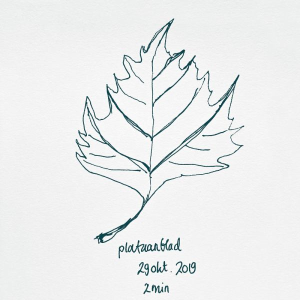 drawing platanus leaf