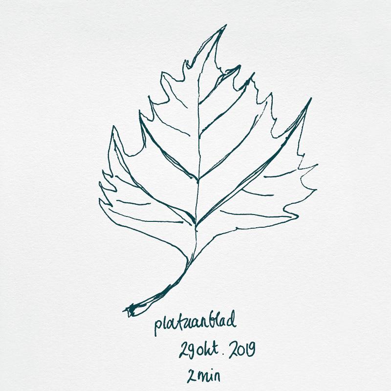 drawing platanus leaf