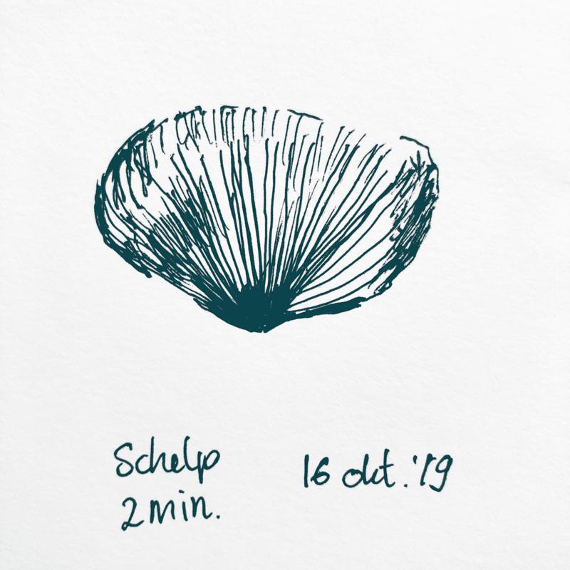drawing sea shell