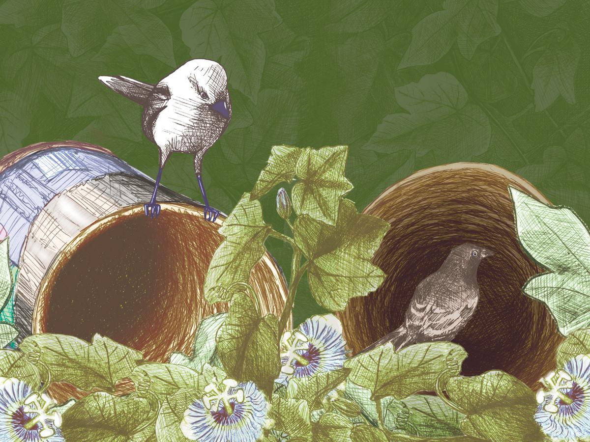 mockingbird cans passiflora