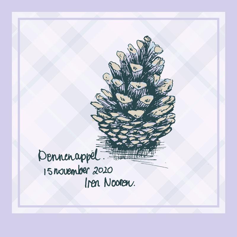 illustration pine cone